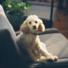 A Helpful Guide to Renting with Pets in Seattle
