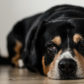 The Most Common Dog Illnesses: Symptoms and Treatment