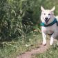 Five Reasons to Develop a Running Routine with Your Dog