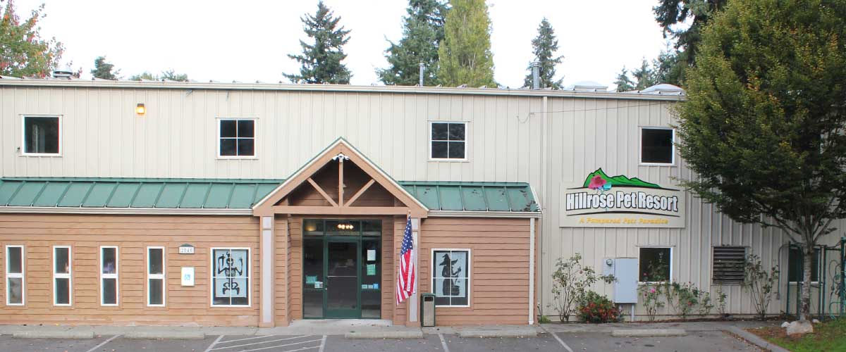 dog-boarding-kennel-burien