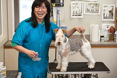 dog-cat-grooming-burien