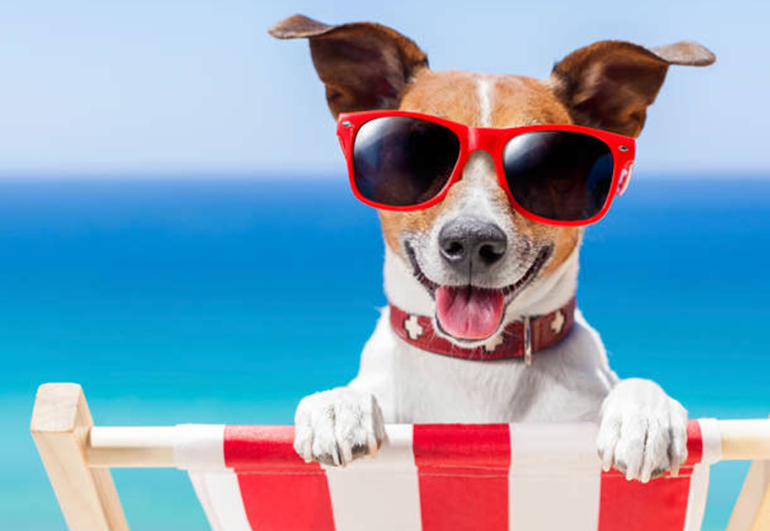 Warm Weather Keeping your Pet Safe in Warm Weather