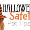 Keep Your Pets Safe this Halloween