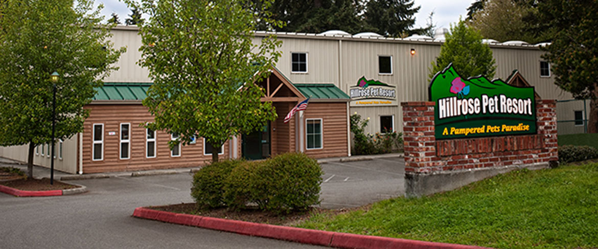 Dog and Cat Daycare in Seattle & SeaTac | Hillrose Pet Resort