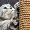 6 Tips To Keep Your Cat From Destroying Your Furniture