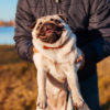 5 Ways Your Dog Can Help You Get a Date