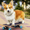 5 Close-to-Home Outdoor Activities That Dogs Love