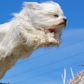 Exploring the Basics of Dog Agility Training
