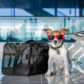 Top 5 Dog-Friendly Cities in the U.S.